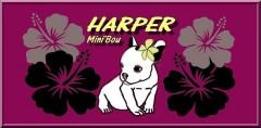 harper mini'bou